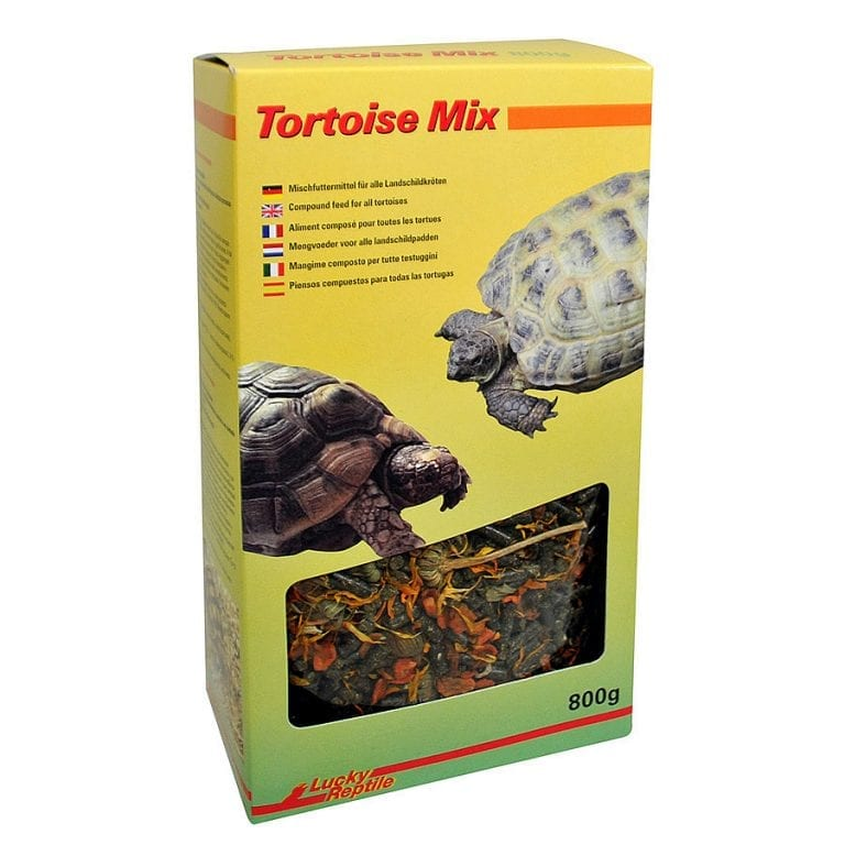 Lucky-Reptile-Tortoise-Mix