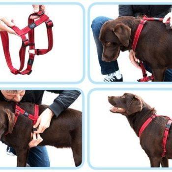 Rogz utility rød på hund