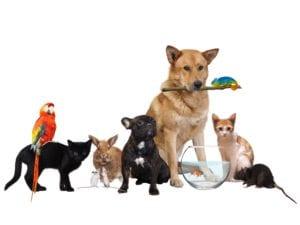 Alle kjæledyr-tropehagen.no
