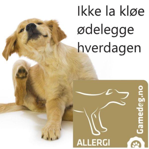 Gamedog.no allergi