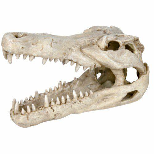 Dekor krokodille kranie 14cm