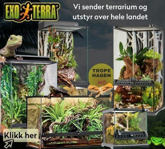 reptil hos tropehagen.no