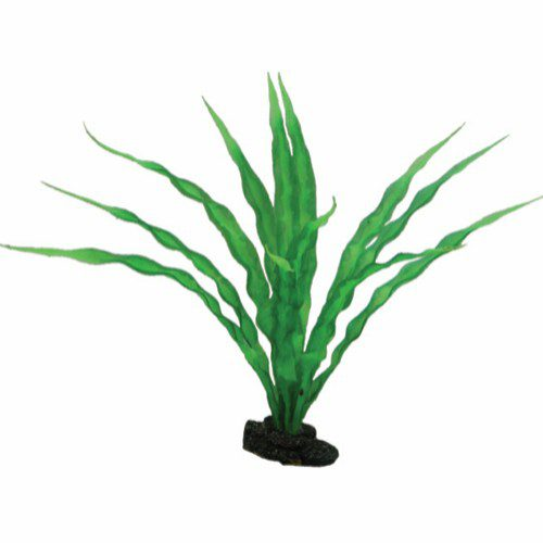 plastplante Crinum