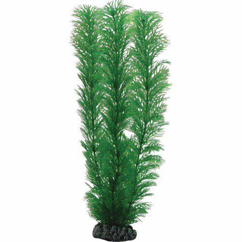 Plastplante Egeria