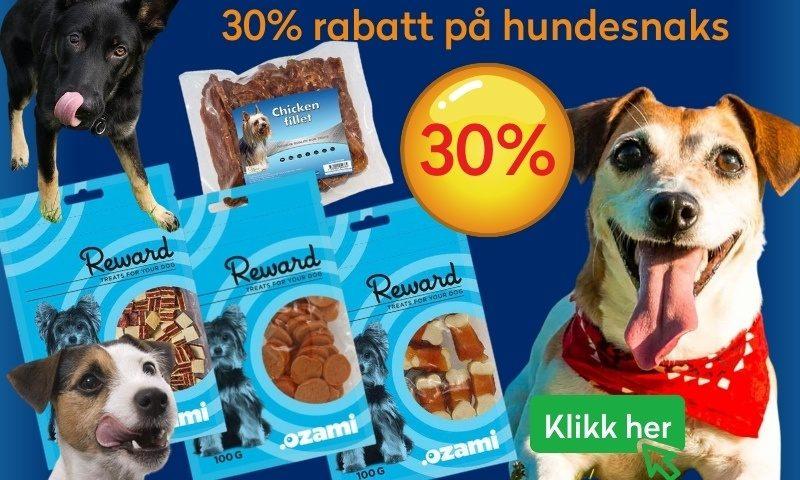 kampanje-ozami-hund
