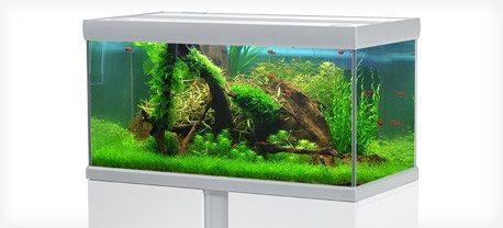 fusion-akvarium tropehagen.no