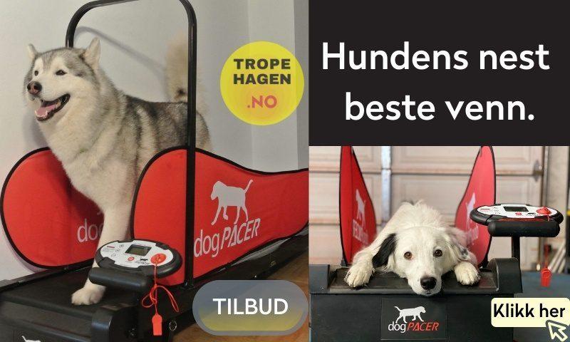 dogPacer tropehagen.no
