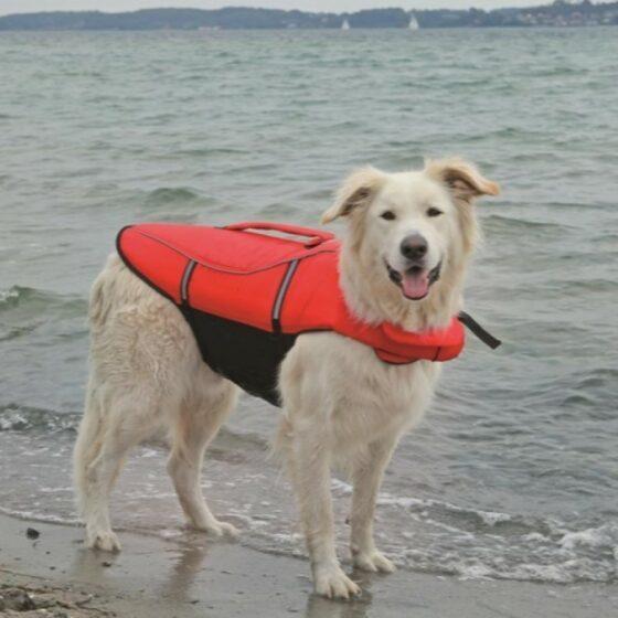 Ozami flytevest hund