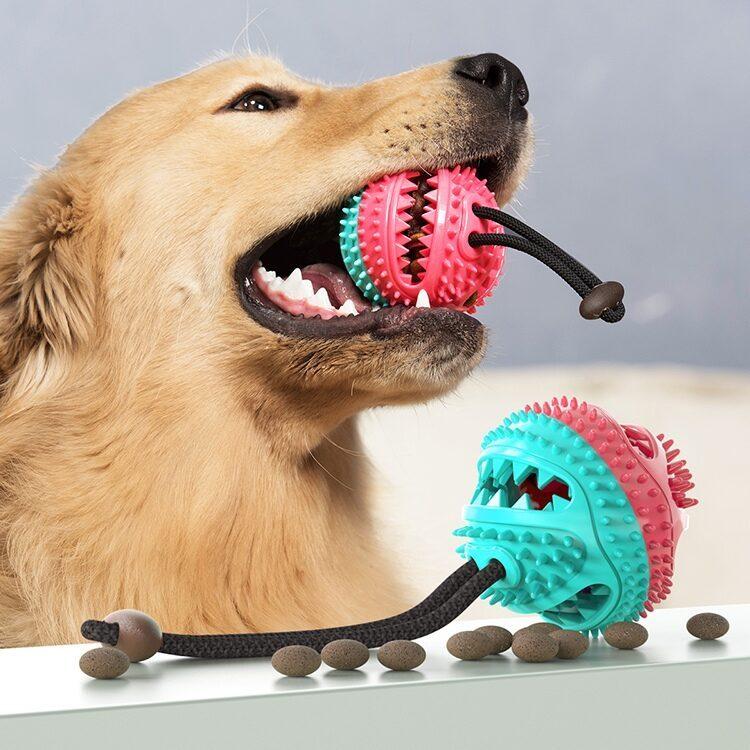 Aktivitet-belønningsball med snor til hund