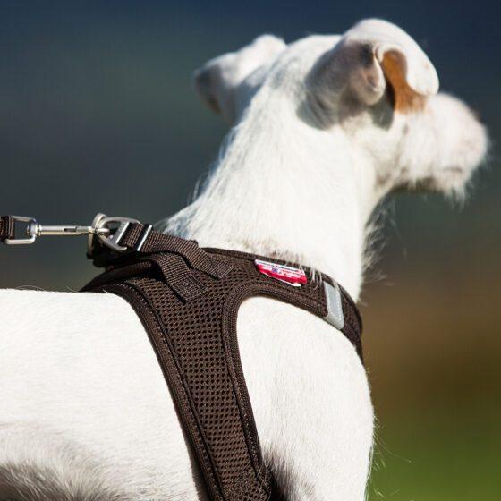 curli vest hundesele harness air mesh