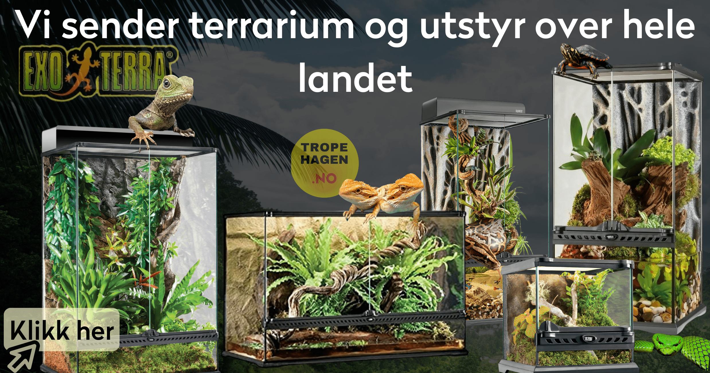 Tropehagen Terrarium